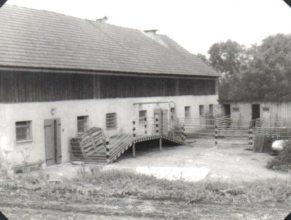 Porodna prasnic u Žďárských.