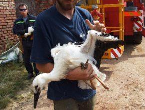 Čápi v náručí hasiče a ochránce přírody.