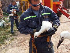 Čápi v náručí hasičů.