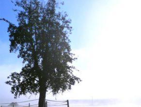 Mlha v Horních Vlčkovicích.