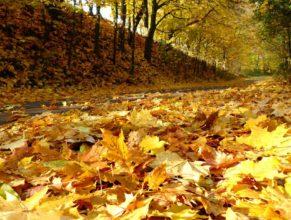 Spadané listí.