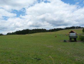 Pastviny v osadě Růžovka.