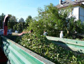 Odklízení pokáceného stromu vedle obecního úřadu.