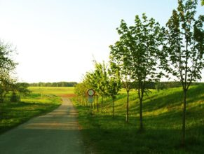 Cesta u činžovního domu vedoucí směrem na sever.
