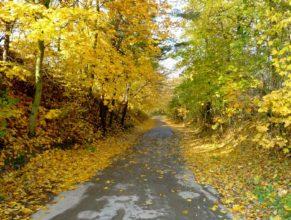 Cesta v Horních Vlčkovicích vedoucí do Krábčic.