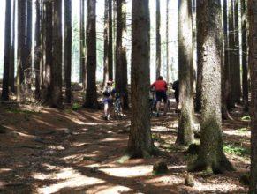 Lesní cesta na Živičinu.