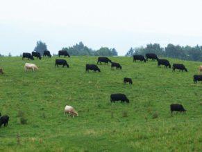 Pastviny u Dobrošova.
