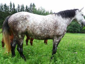 Kůň na pastvině u Dobrošova.