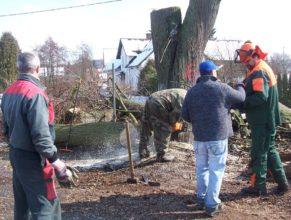 Kácení zbytku kmene lípy před obecním úřadem.